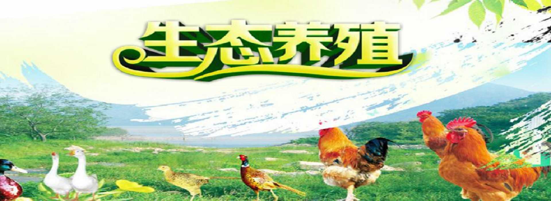 湖南共享农场-生态养殖