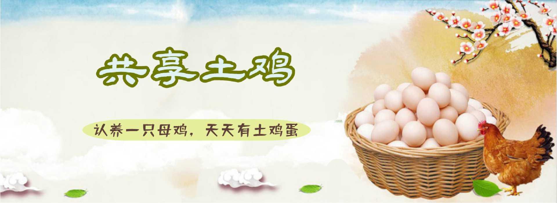 湖南共享农场-共享土鸡