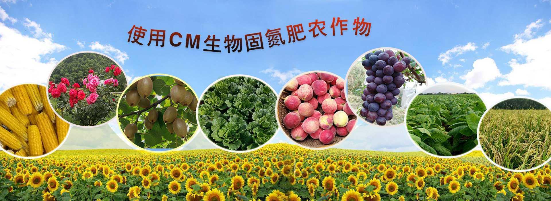 湖南共享农场-CM生物固氮肥效果